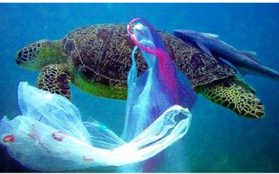 Rác thải biển: Tình trạng ô nhiễm báo động ở mức đáng sợ