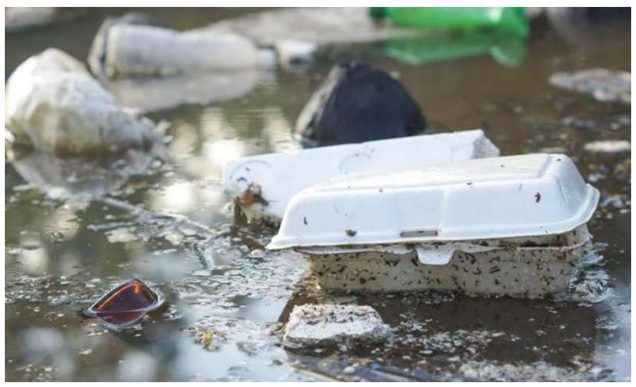 Hộp nhựa mang đi - Tai họa của đại dương 1