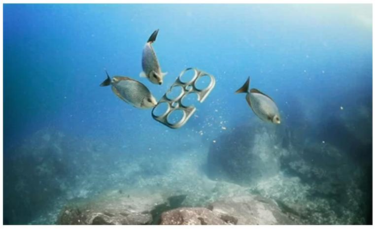 Đồ nhựa một lần đang trở thành thức ăn của các loại sinh vật trong đại dương