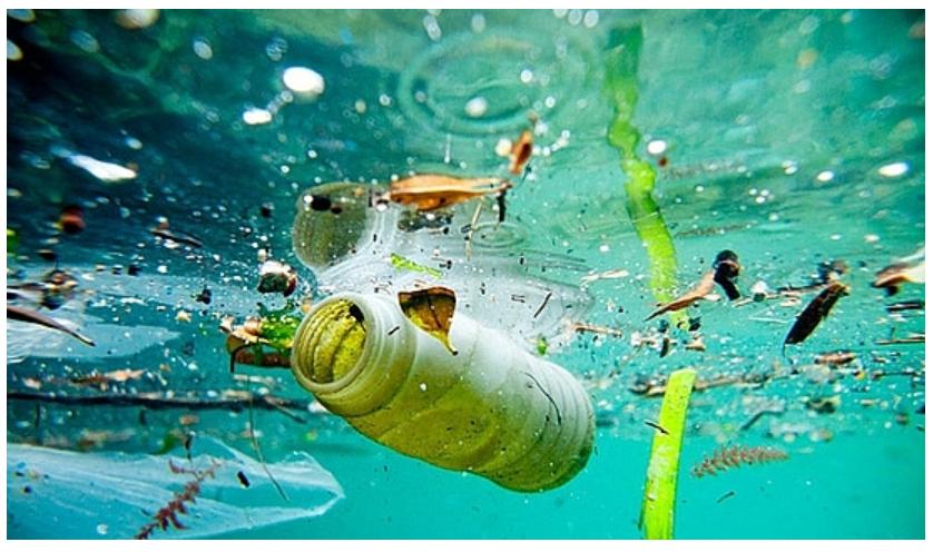 Cảnh báo: Ô nhiễm vi mô ở vùng Tây Bắc Đại Tây Dương 2